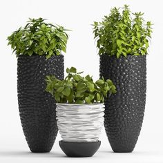 Decor Plant Model, this model plant piece of Art, Textures low-poly model ready for Virtual, accurately design for perfect visualization Low Poly 3d Models, Terrarium Diy, 3d Visualization, 3d Max, Artificial Plants, Garden Furniture, Furniture Ideas, Trees To Plant, Garden Pots