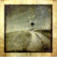 Lone Tree Tuscany, Ltd Ed 15