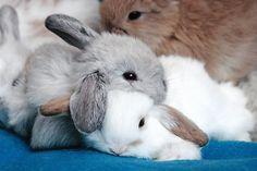 :) bunnies