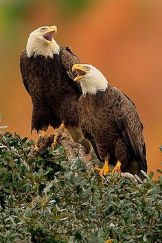 """Screamin' Eagles """" just like the one at Lake Como Uncle Pete shared with me. It was truly majestic."""