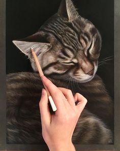 Sweet Dreams Cat.. Domestic and Wild Animal Drawings. By Tatjana Bril.