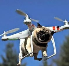 Anche i cani possono volare