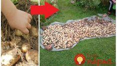 Zasaďte v júli bez rýľa a motyky: Skúsili sme to len s pár zemiakmi a úrodu ohromná, zberali sme skoro až do Vianoc! Outdoor Decor, Garden, Outdoor, Stepping Stones, Raised Beds