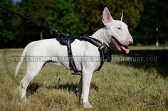 Barbed Wire Hand Painted #Bull #Terrier #Dog #Harness  $159.90 | english-bull-terrier-dog-breed-store.com