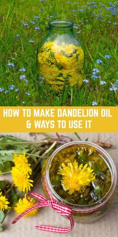 Dandelion oil is unbelievably easy to make and can be used in so many different ways. It heals pain and sore muscles, moisturizes dry skin and so much more. remedies baking soda remedies diy home remedies skin care remedies sore throat remedies treats Healing Herbs, Medicinal Plants, Natural Healing, Natural Oil, Holistic Healing, Natural Health Remedies, Herbal Remedies, Cold Remedies, Natural Medicine