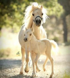Mama and baby horse