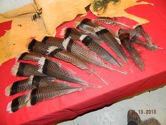 20 Beautiful Natural Merriam's Wild Turkey Feathers from The Black Hills of South Dakota Ornaments Decorating Floral Arrangements Turkeys by dakotagypsy on Etsy