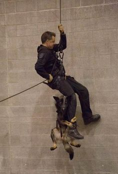Police Dog Puppy Needed Some Extra Support During Belay Training