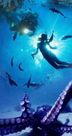scuba diving in Sri Lanka, I need to dive with an octopus soon exploretraveler.com exploretraveler.net