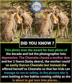 That's so sad.who says animals don't have feelings Some Amazing Facts, True Interesting Facts, Interesting Facts About World, Intresting Facts, Unbelievable Facts, Wow Facts, Real Facts, Wtf Fun Facts, True Facts