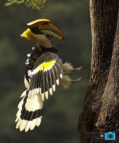 Photographer :@shefiqbasheer #birdsofinstagram #birdstagram #birdwatching #instabird #birdphotography #birding #instabirds #wildlife…