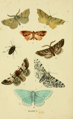 The common moths of England Glasgow, Manchester, and New York,George Routledge and Sons ;[1870] biodiversitylibrary.org/page/15913965