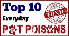 Most household items can poison your dogs and cats -- if you think your pet has ingested a toxic substance, call your veterinarian immediately. http://healthypets.mercola.com/sites/healthypets/archive/2014/05/30/top-10-pet-poisons.aspx