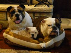 """❤ """"We are leaving the other 2 beds empty in case we have guest"""" ❤ Posted on Celebrity Bulldogs"""