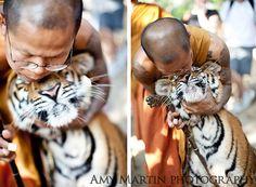 Monk kisses a tiger  http://www.amymartinphotography.com/blog/wp-content/uploads/2009/12/Tiger3.jpg