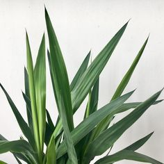 Some new company in the studio and inspiration for new designs  #foliage #tropical #plants #minimalism #inspiration