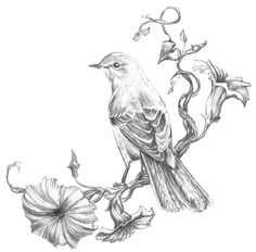 Great idea for a mockingbird tattoo.
