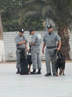 Personal de serenazgo que trabajan con canes. Capacitación en la Gerencia de Seguridad Ciudadana de Pueblo libre.