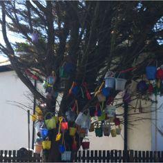 The bucket and spade tree!!!