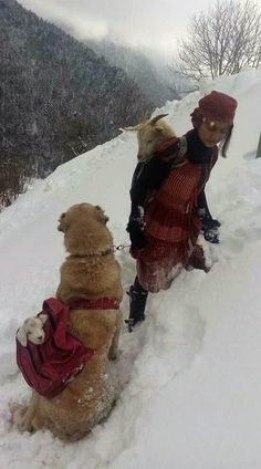 Turkish girl carrying a goat on her back that just gave birth and her dog carrying the baby. Rize Turkey