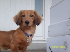 Dudley as a puppy!!!