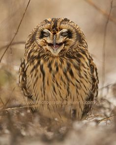 Ohh So Funny by Henrik Nilsson on 500px I doubt a short earled owl can actually laugh. But it sure looks like this one is.