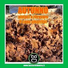 Trova il #cane fra le #foglie !  Seguici su youtube/bastardidentro (Clicca in bio) #bastardidentro #autunno www.bastardidentro.it