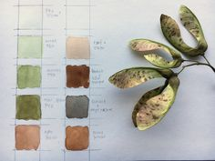studying the colors of the world – or to be more precise: (and a little less pretentious) the colors of winged maple seeds (samaras) this is where I start – a twig of winged maple seeds… World Of Color, Botany, Studying, Seeds, Colors, Pictures, Colour, Study, Color