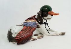 Debra Broz, Dog as Duck, 2015.