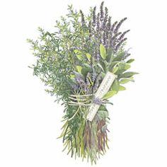 herbsdeprovence.jpg (240×240)