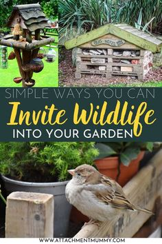 Want to invite wildlife into your garden? Here are some tips to encourage birds, squirrels, badgers, hedgehogs and foxes to your backyard. Wildlife in Your Garden | How to Attract Birds | How to Attract Wildlife | Inviting Wildlife | Garden Tips | Attachment Mummy #gardentips #wildlife #attractingwildlife #invitingbirds #attractingbirds Plants Under Trees, Eco Garden, Bug Hotel, Invite, Invitations, How To Attract Birds, Perfect Plants, Companion Planting, Craft Activities For Kids