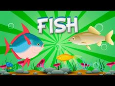 (2) Fish | Educational Video for Kids. - YouTube