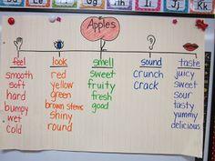 First Grade Smiles: Five Senses
