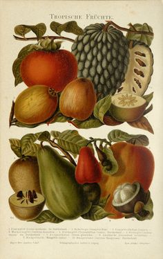 1897 Antique print of TROPICAL FRUITS