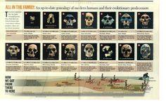 Genealogy of modern humans #evolution