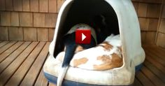 It's Just an Ordinary Dog House Until You See What Comes Out! - Funny Video