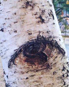 Birch tree eyes #birch #eyes #mothernature #greenman #fractals #sacredgeometry #trees #treemagick #beauty #beautiful #seasons #nature #change #death #weboflife #instagood #instagramers #igers #igersoftheday #love #connected #creation #manifestation #phi #life by marlitas_vision