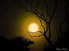 Como vejo a lua