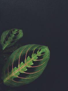 #ihavethisthingforfoliage