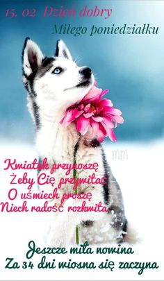 Dog Wallpaper, Snow Dogs, Super, Husky, Dog Cat, Cats, Wallpapers, Gatos, Wallpaper