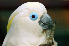 Bird Forums And Red List Experts - Amazing Global Resources - http://www.parrotshop.org/bird-forums-and-the-red-list-experts-amazing-global-resources/