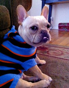 Brody has a new sweater!