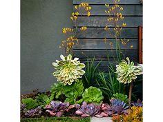 Tropical plants - Home and Garden Design Idea's
