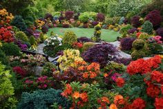 Colours of the rainbow in the upper garden. by Four Seasons Garden, via decorating garden design design Amazing Gardens, Beautiful Gardens, Beautiful Flowers, Rhododendron Plant, Azalea Color, Invasive Plants, Porches, Modern Garden Design, Garden Cottage