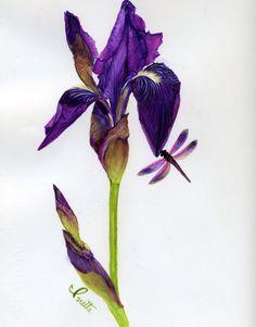 Purple Iris - Ivette Evans