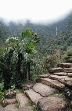 Ciudad Perdida, also known as The Lost City Colombia, is a city that was built by the Tayrona in the Sierra Nevada de Santa Marta, Colombia. Temple Ruins, Lost City, Sierra Nevada, Sidewalk, River, Pictures, Outdoor, Colombia, Walkway