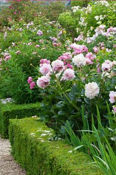 Low hedge around peony and rose garden - excellent idea .rh Low hedge around peony and rose garden English Garden Design, Rose Garden Design, Pink Garden, Dream Garden, Peonies Garden, Beautiful Flowers Garden, Beautiful Gardens, Garden Shrubs, Garden Landscaping