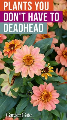 plants you don't have to deadhead! These easy-care plants don't even require deadheading - perfect for patios!These easy-care plants don't even require deadheading - perfect for patios! Container Flowers, Container Plants, Container Gardening, Succulent Containers, Easy Care Plants, Plant Care, Gardening For Beginners, Gardening Tips, Organic Gardening