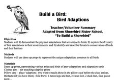 Physical Adaptations, Migratory Birds, Shorebirds, Learning Tools, Conservation, Canning