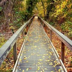 Missions Hike & Bike Trail in San Antonio, Tx!! LOVE this BEAUTIFUL FALL pic in my AWESOME CITY!!!! <3